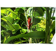 Tropical Impressions - Red Ginger Flower, Framed in Lush Jungle Green Poster