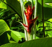 Tropical Impressions - Red Ginger Flower, Framed in Lush Jungle Green Sticker