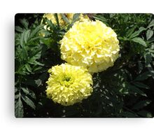 Yellow Flower Photo Canvas Print