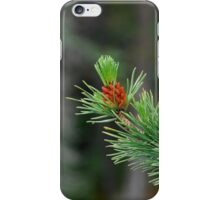 Lone pine iPhone Case/Skin