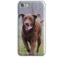 Gala The Chocolate Lab iPhone Case/Skin
