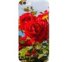 Red roses bush iPhone Case/Skin