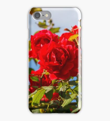 Red roses bush iPhone Case/Skin