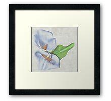 Precious Lily Framed Print
