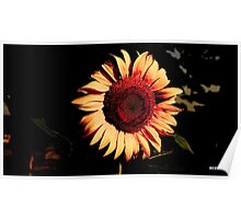 lone sunflower Poster