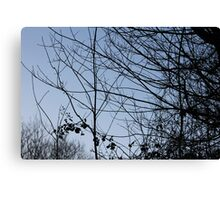 Branches and leaves Canvas Print