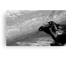 GRACKLES (Black and white photo) Canvas Print