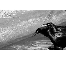 GRACKLES (Black and white photo) Photographic Print