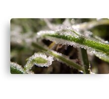 Winter's Frost Canvas Print