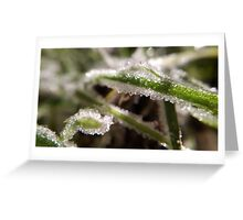 Winter's Frost Greeting Card