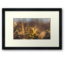 Fat Pikachu going places - Grass... Framed Print