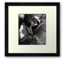 Dogs with game face on .2 Framed Print