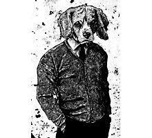 Temporary Beagle Photographic Print