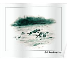 Irish Wolfhounds Coursing Poster