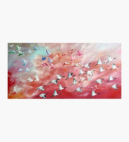 100 Birds in flight (2) Photographic Print