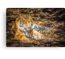 Big Cat     PC2 Canvas Print