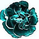 Teal Rose by shalisa