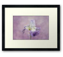Lavender in the Garden Framed Print