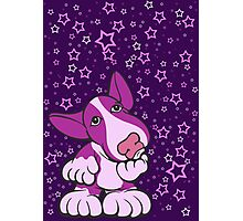 Pondering English Bull Terrier Pinks Photographic Print
