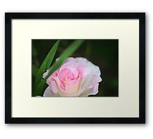 Seduced by a Rose Framed Print