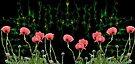 Pink Poppy - art work by LudaNayvelt