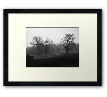 Majestic Old Oak Framed Print