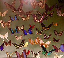 Butterflies Flutter By by umeimages