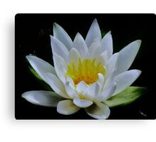 Water Lily in White...Pond at Yachats Inn...Yachats, Oregon Canvas Print