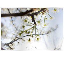 Radiant Blossoms Poster