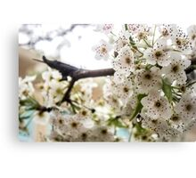 Speckled Blossoms Canvas Print