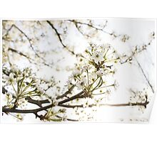 White Blossom II Poster