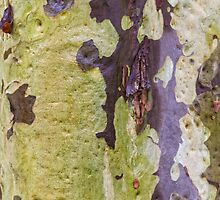 Gum Tree Detail by Elaine Teague
