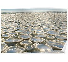 Sea pancakes Poster