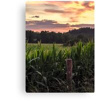 Cornfield delight Canvas Print