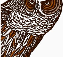 Brown Owl Sticker