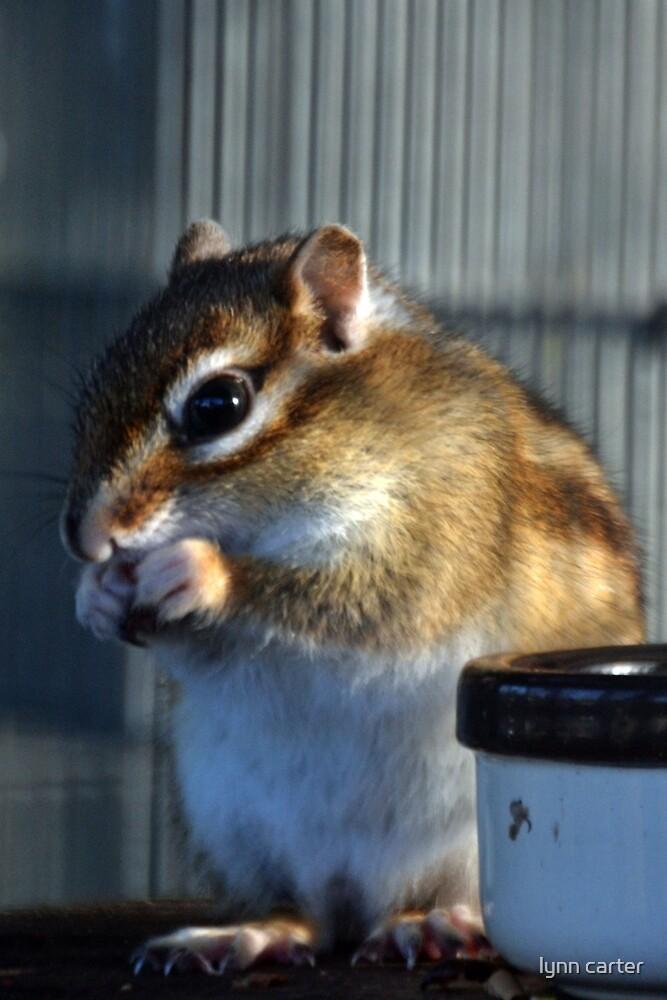 Chipmunk by lynn carter