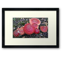 Fly Agarics and Magic Mushrooms Framed Print