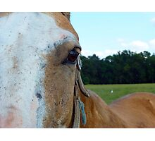 The Soul Of The Horse Photographic Print