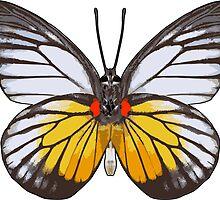 Red Spot Butterfly by Garaga