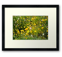Springtime In The Desert Framed Print