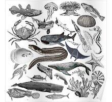 Vintage Ocean Drawing Compilation Poster