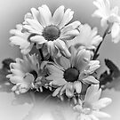 Chrysanthemum's in mono by JEZ22