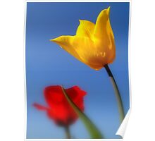 Tulips for You.. Poster