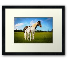 Staying Close Framed Print