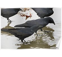 Puddle Of Crows Poster