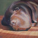 Bailey the Chocolate Lab by Pamela Burger