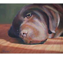 Bailey the Chocolate Lab Photographic Print