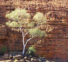 Ghost Gum and Walls of Kings Canyon, Northern Territory! Aust. by Rita Blom