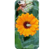 Yellow Flower Green Insect iPhone Case/Skin