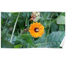 Yellow Flower Green Insect Poster